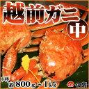 【11/6解禁!】越前ガニ(中)福井県産越前がに・蟹 約80...