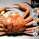 【11/6解禁!】越前ガニ(特大)献上級・福井県産越前がに・...