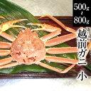 越前ガニ(小)福井県産越前がに・蟹 約500g〜800g×1...