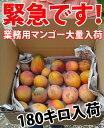 大好評で追加します!箱いっぱい14キロ♪業務用(訳あり)マンゴー!お味は当たりハズレもある...