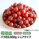 【送料無料】【ミニトマト】【高糖度】【甘い】優糖星(ゆうとうせい) バラ 約3,500gシェアタイプ!【まとめ買い割引あり】