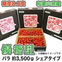【500円OFFクーポン配布中】【送料無料】【ミニトマト】優糖星(ゆうとうせい) バラ