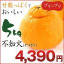 不知火 デコポン!不知火(デコポン) 5kg 熊本県産