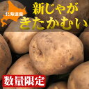 【数量限定】北海道産新じゃが「きたかむい」Lサイズ10kg【送料無料】
