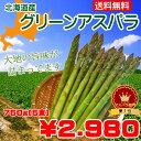 【送料無料】北海道産グリーンアスパラ Lサイズ750g(150×5束)