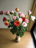 バラ色の盛り合わせとバラ 信楽花瓶つき