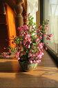 ハナカイドウサクラ盆栽桜盆栽【信楽鉢】 【桜】 2017年春開花のハナカイドウ盆栽となります。