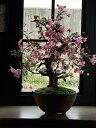 桜盆栽2017年4月1週目頃開花 おすすめ信楽鉢入りハナカイドウサクラ盆栽  プレゼントにもおすすめです
