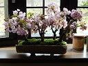 お祝いさくら4月開花桜盆栽お祝いの贈り物に サクラ盆栽桜並木桜盆栽信楽鉢入り 海外でも BONSAUIボンサイ自宅でお花見 さくら盆栽