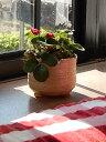 イチゴいちごの鉢植え 手軽で簡単に栽培できます! 四季なりイチゴ 自宅で プチ 果樹菜園 お花もかわいいピンク花