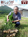 【送料無料】新しょうが4kg 兵庫県産の無農薬 しょうが 国産 生姜 ショウガ【RCP】