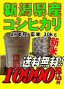 新米29年産新潟県産 コシヒカリ 玄米 30kg お米 【smtb-TD】【saitama】【あす楽_土曜