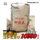 新米令和2年産新潟県産 コシヒカリ 玄米 30kg お米 【...