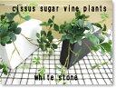 シサスプラント シュガーバイン 長方形プラント 石:ホワイト 造花 インテリア 観葉植物 ミニ