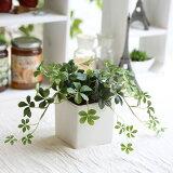 研究SHISASUAIBI ( SHUGABAIN ) [花] [光/ CT显像催化剂][爽やかな真っ白な鉢はキッチンにもぴったり◎◎【当店人気の観葉植物シリーズ】L.シサスアイビー(シュガーバイン) 可愛い葉っぱが優しく消臭!【造花】【