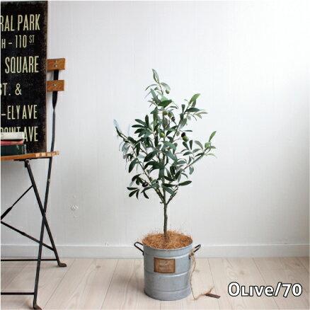 オリーブ H70 ◆ブリキポット 観葉植物 造花...の商品画像