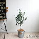 オリーブ H70 ◆ブリキポット 観葉植物 造花 インテリア CT触媒 【北海道、沖縄 送料別途 +1500円】