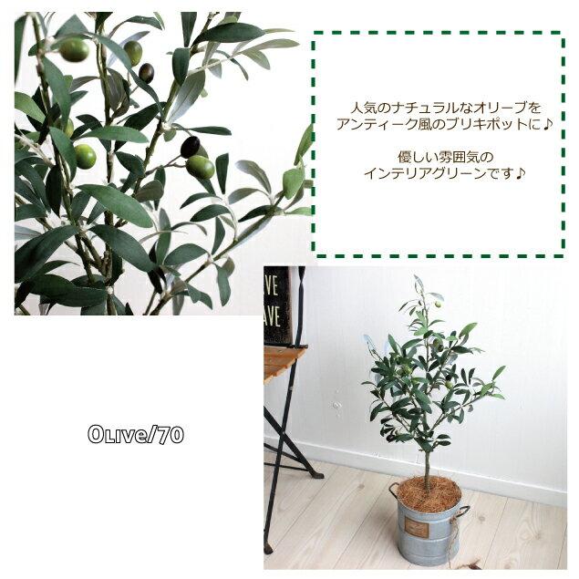オリーブ H70 ◆ブリキポット 観葉植物 造...の紹介画像2