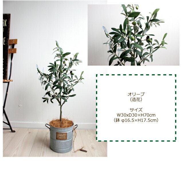 オリーブ H70 ◆ブリキポット 観葉植物 造...の紹介画像3