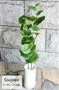 シーグレープ H85 K-82 造花 観葉植物 光触媒 CT触媒 観葉植物 大型 【送料無料 (北海道 沖縄 有料)】