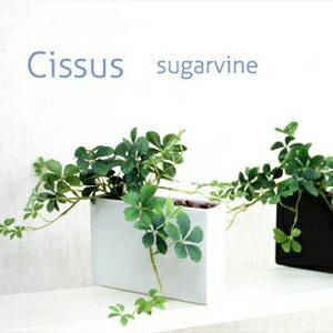 シサスプラントシュガーバインシッサスオシャレな長方形タイプ石:ブラウン造花インテリアミニ観葉植物人工