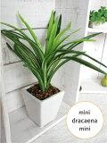 ミニミニドラセナ H22/白鉢【造花】【光触媒/CT触媒】