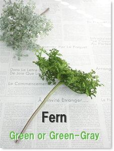 グリーン ファーン インテリア