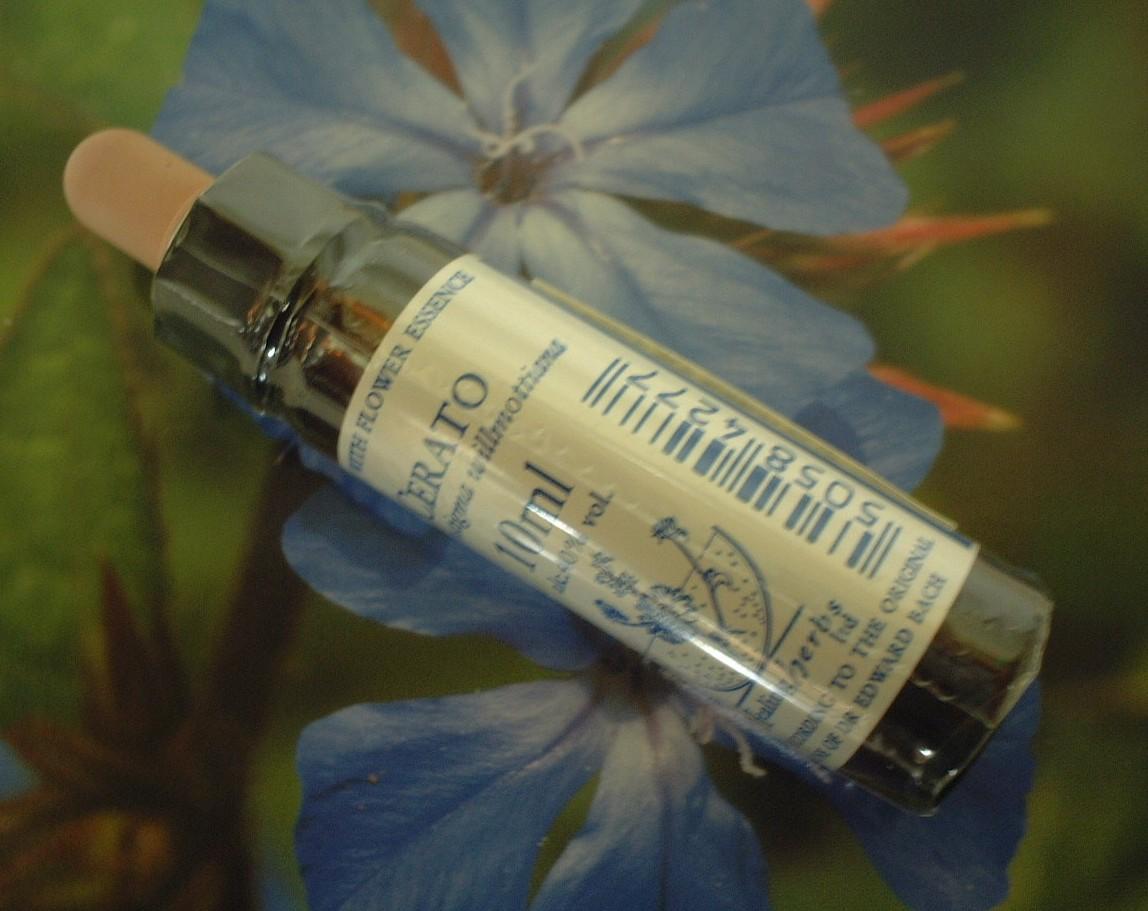 【ネコポスで送料無料】Healing Herbs No.6 セラトーエキス 10ml[HealingHerbs(ヒーリングハーブス) フラワーエッセンスヒーリングハーブス]