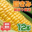 送料無料 嶽きみ 青森県が誇るプレミアムとうもろこし12本セット!まるで果物のような甘さ/トウモロコ...