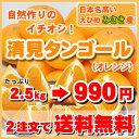 2.5kg⇒990円今クーポンで890円★予約商品3月13日より〜!大人気の定番オレンジ日本名高い・みさき産・清見タンゴール…