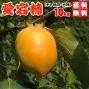 あたご柿 大箱10kgで送料無料・愛宕柿(干し柿用)渋柿・大箱10kg・愛媛産・ご家庭用