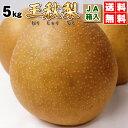 稀少!大玉・王秋梨(おうしゅうなし)5kg(7〜10玉)JA鳥取中央製品箱入・送料無料こたつに王秋梨は美味です。