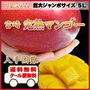 送料無料!プレミアム巨大ジャンボマンゴー宮崎完熟マンゴー5L(650g以上)一般ではなかなか入手困難な5Lサイズ