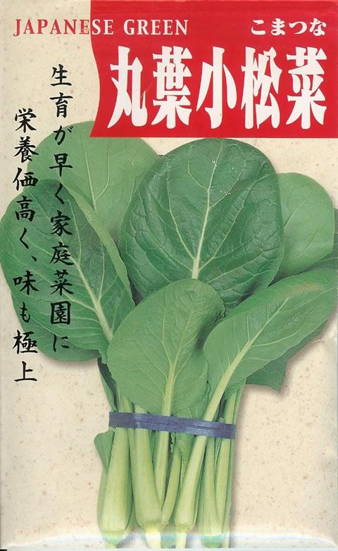 コマツナ種丸葉小松菜こまつな 小松菜