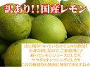 【送料無料】【訳あり】減農薬で育てた国産レモン 5kg酸味とさわやかな香り♪【ご家庭用】
