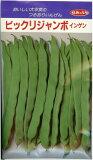 つるありいんげん種ビックリジャンボ(30ml)