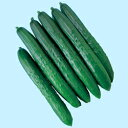 キュウリ種夏のめぐみ (350粒)きゅうり 胡瓜