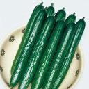 キュウリ種Vアーチ (350粒)きゅうり 胡瓜