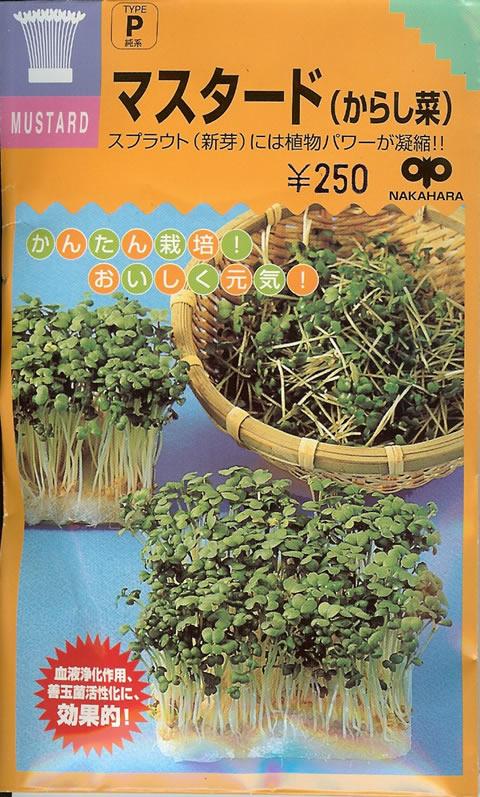 スプラウト種マスタード(からし菜)(40ml)