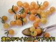 トマト種マイクロトマト イエロートパーズ (30粒)