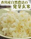 発芽玄米 600g 農薬完全不使用、自然栽培で育てられた四国香川県の元気米 GABA量な