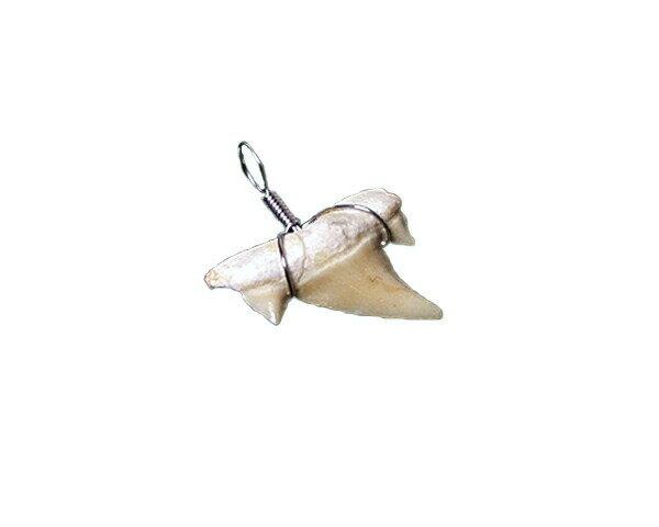 ペンダントトップ サメの歯(オトダス・オブリクゥウスの化石) 小 No.1