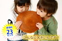 【送料無料】札幌 デカ どら焼き なんと600g栗入り どら焼き /特大/誕生日/【楽ギフ_のし】