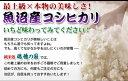 送料無料・分搗き対応22年産魚沼コシヒカリ玄米10K