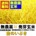 【無農薬 らくらく発芽玄米】29年産 宮城県産金のいぶき 2kgx2袋 【無洗米の玄米