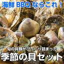 海鮮バーベキュー 季節の貝セット サザエ 岩牡蛎 お中元 ご贈答 貝類 貝