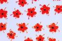 REAL FLOWER【フラワーネイルシール】(4)レッド&OR 38枚入