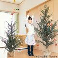 オランダ Hogewoning社 クリスマスツリー