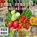 自然農法プラチナ・自然栽培 野菜セット(夏季) Lサイズ(ボ...