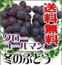 岡山特産「真冬のぶどうグローコールマン」(1kg)2房 冬に収穫される大粒ブドウは大変珍しいのです。【smtb-kd】 【10P01Oct16】